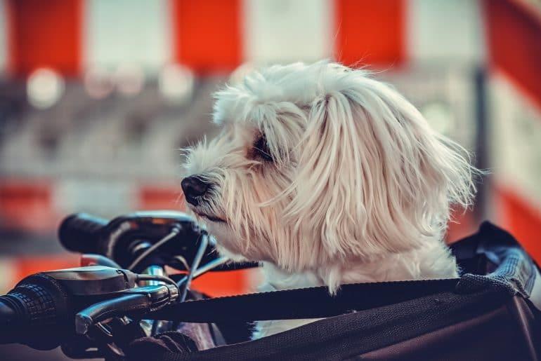 rover dog sitting
